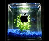 G4 Cube as Fish Tank, Programmed, Old Macs As Art Installations, Brooklyn NY