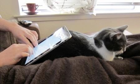 lolcat iPad stand