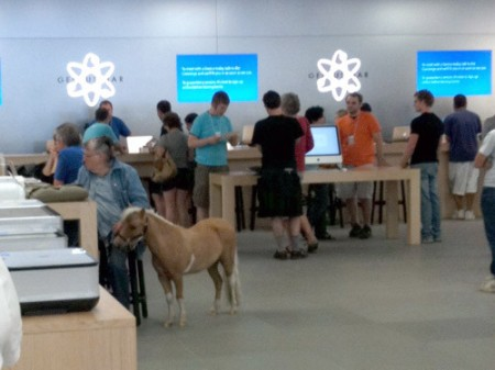Little tiny miniature horse at Apple Store, by Frank Chimero