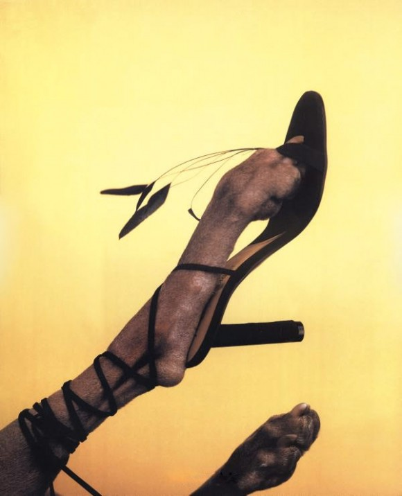William Wegman Dog High Heels Fashion