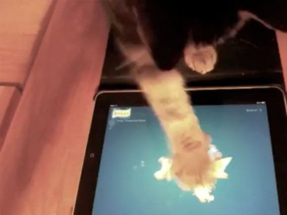 Friskies iPad Game for Cats