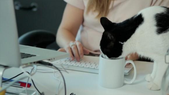 Cat-vertising Agency uses Mac