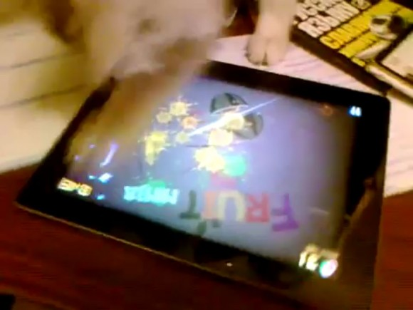 Fruit Ninja iPad cat