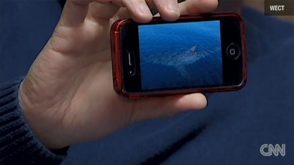 Great white shark iPhone video Matt Garrett